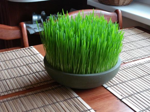 Fresh Wheatgrass (cosmomomwithatwistoflyme.com)